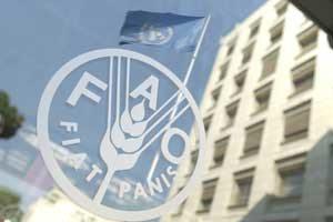 FAO Buildings